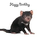 A Tasmanian Devil birthday card 2L by Gerry Pearce