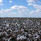 Cotton On by norgan