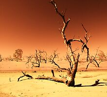 Menindee Lake NSW Australia by Steve  Roe