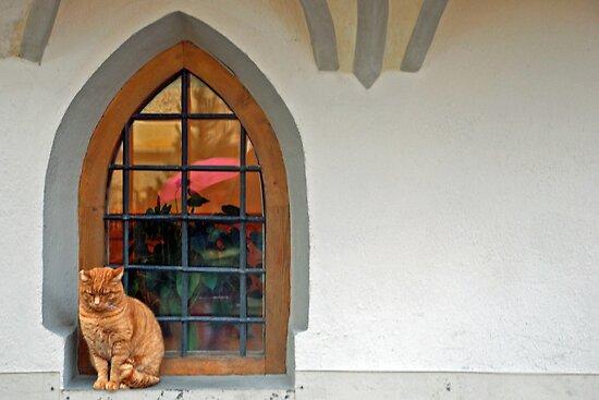 Cat in the window by Arie Koene