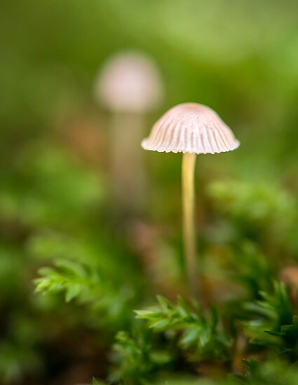 Autumn mushrooms by BenRobsonHull