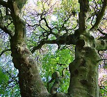 Forked Branches by Forfarlass