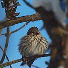 Winter Bird by Jeff Ashworth & Pat DeLeenheer