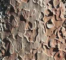 Tree bark by Morag Anderson