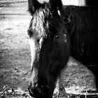 Horse by MsMelStevens