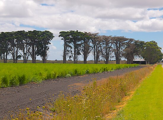 Windbreak, Asparagus Farm, Cardinia, Gippsland, Victoria. by johnrf