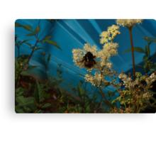 bumblebee on blue Canvas Print