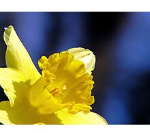 Spring In The Spotlight Photographic Print