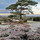 Bratley Ridge New Forest by Gary Richardson