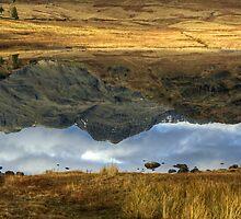 Reflections  by VoluntaryRanger