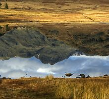 Reflections  by Jamie  Green