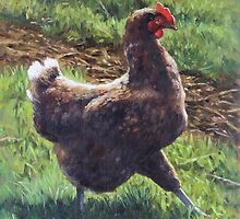 Single chicken walking around on grass by martyee