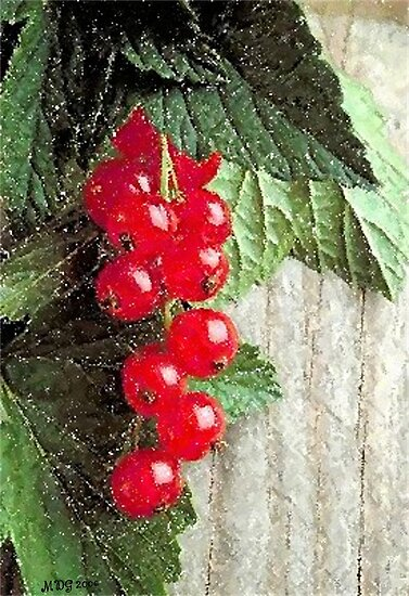 Currants Fruit Poster, Print & Card by Oldetimemercan