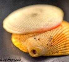 Shell Shock by Karl F Davis