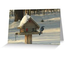 Blue Jay 1 Greeting Card