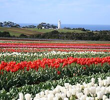 Table Cape Lighthouse and Van Dieman's Tulip Company- Wynyard, TAS by PepperPotPics