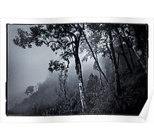 Forest in the fog Poster