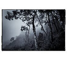 Forest in the fog Photographic Print