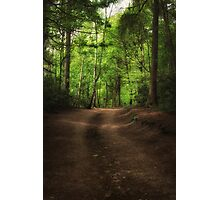 Great Heads Wood Roundhay Park (HDR) Photographic Print