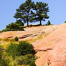 Pine Trees on Red Rock Mountain by dbvirago