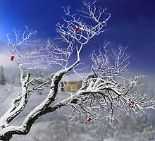 Red Apples by Igor Zenin