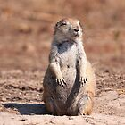 Mrs. Rodentia Sunbathing by Alex Preiss