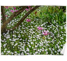 multiple flowers Poster