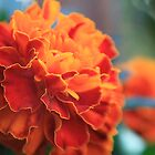 Blooming Marigold by onemistymoo