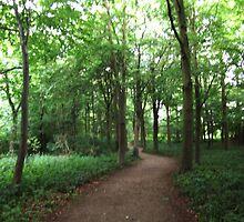 Woods at Nunnington Hall by apoetsjournal