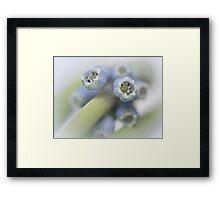 Grape Hyacinth I Framed Print