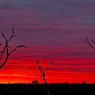 Three Trees by Pene Stevens