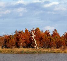 Green Cay Wetlands by Gail Falcon