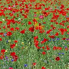 poppy field by supergold