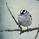 White Crowned Sparrow ~ by Renee Blake