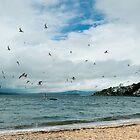 Gulls on Freyberg Beach, Oriental Bay by EylandImages