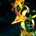 Yellow-Orange Daylilies by Shawna Rowe
