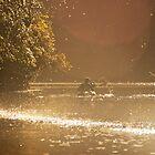 Doubtful Sound Morning Light by EylandImages