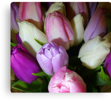 Tulips In January  Canvas Print
