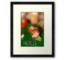 Little Chicken Framed Print