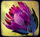SOUTH AFRICAS TREASURE ( A PROTEA ) by Doria Fochi