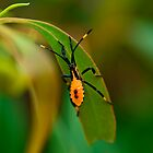 Orange bug on a leaf by Adrian Cusmano