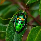 Shiny beetle on a leaf by Adrian Cusmano