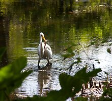 A Great Egret feasts on a Frog  by jeffreynelsd