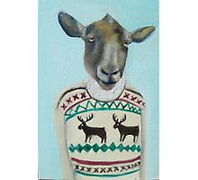 sheep sweater Photographic Print
