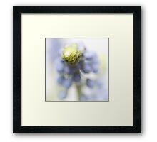 Grape Hyacinth III (abstraction) Framed Print