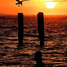 Sunrise Descent - Outer Banks Ocracoke by Dan Carmichael