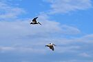 In Flight Together 2 by Dawne Dunton