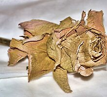 Faded Rose From Days Gone By by lynn carter