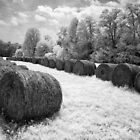 Harvest of Hay - Blue Ridge Parkway by Dan Carmichael