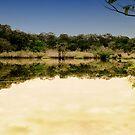 Rainforest reflections by borjoz